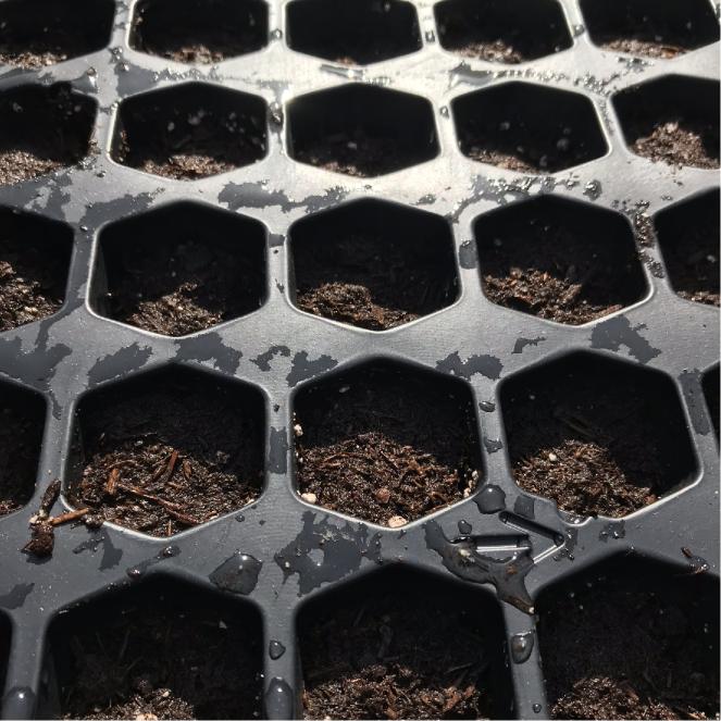 seedtray2
